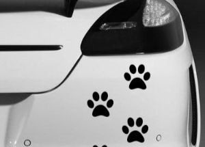 Pegatinas para coches